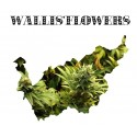 Wallis'Flowers